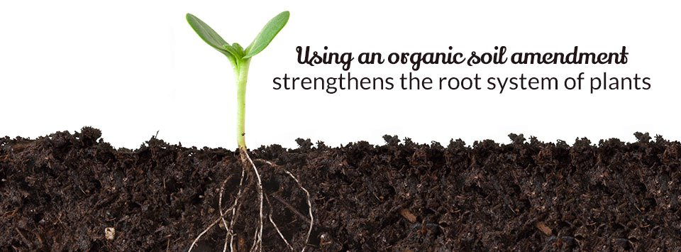 How organic soil amendment can benefit your plants for Soil organic matter
