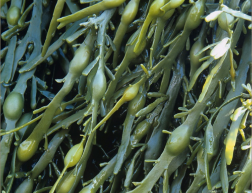 Why Is Liquid Kelp Good for My Garden