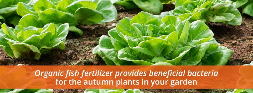 How Will Organic Fish Fertilizer Improve Autumn Gardens Indian