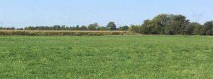 327 More Hay Bales Using Indian River Organics® Hay Formula!